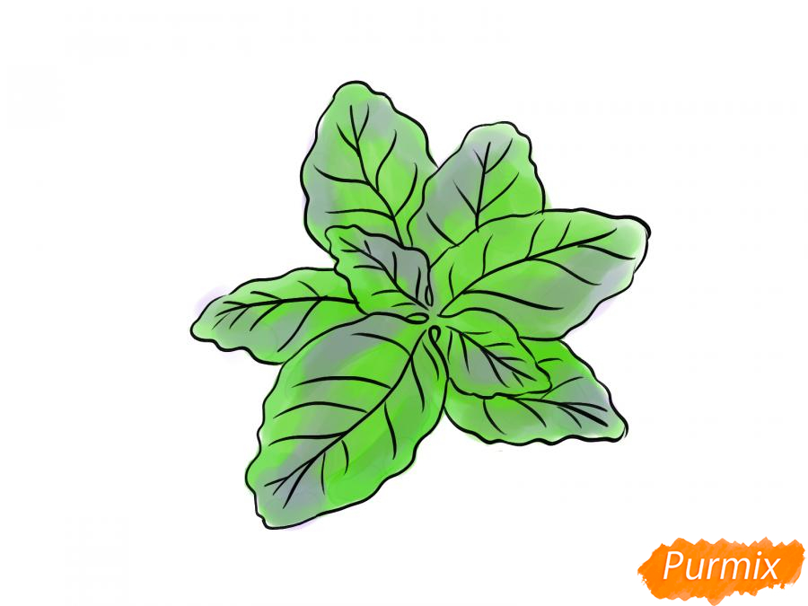 Рисуем базилик карандашами - шаг 7