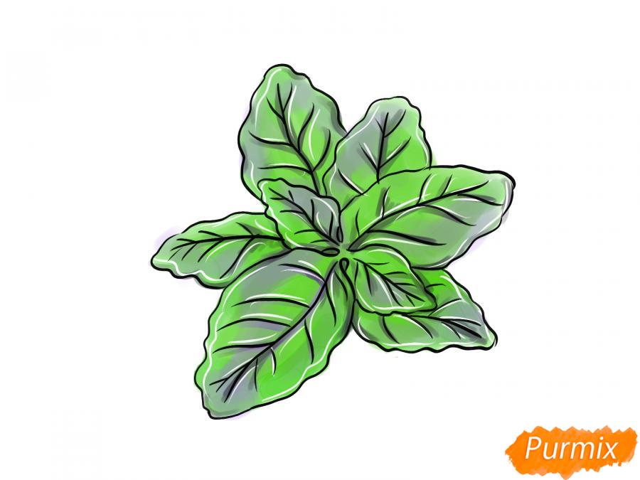 Рисуем базилик карандашами - шаг 8