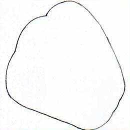 Рисуем болгарский перец в разрезе простым - шаг 1