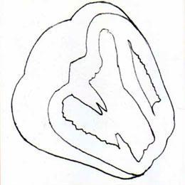 Рисуем болгарский перец в разрезе простым - шаг 2