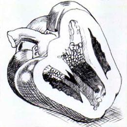 Рисуем болгарский перец в разрезе простым - шаг 5