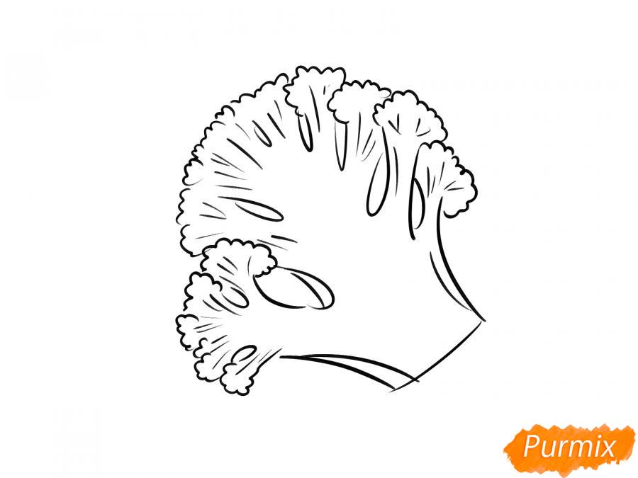 Рисуем брокколи в разрезе - шаг 6