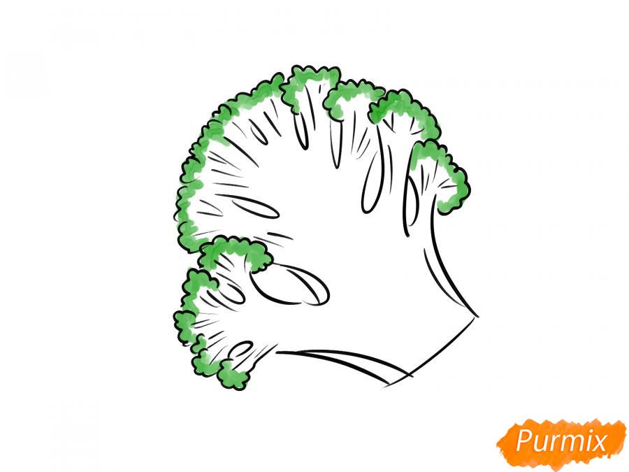 Рисуем брокколи в разрезе - шаг 7