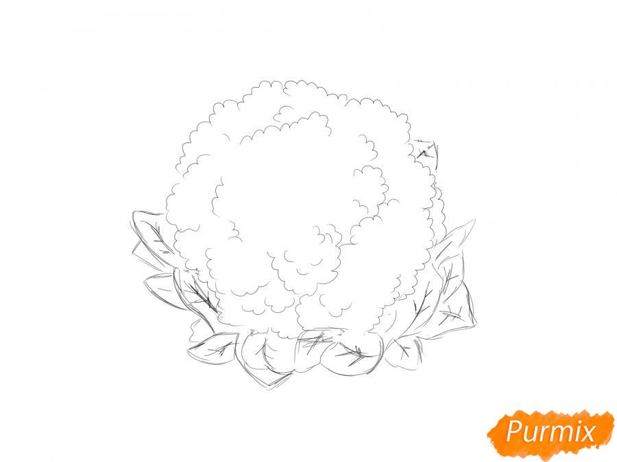 Рисуем цветную капусту карандашами - шаг 4