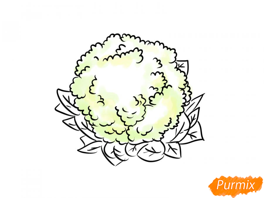 Рисуем цветную капусту карандашами - шаг 6