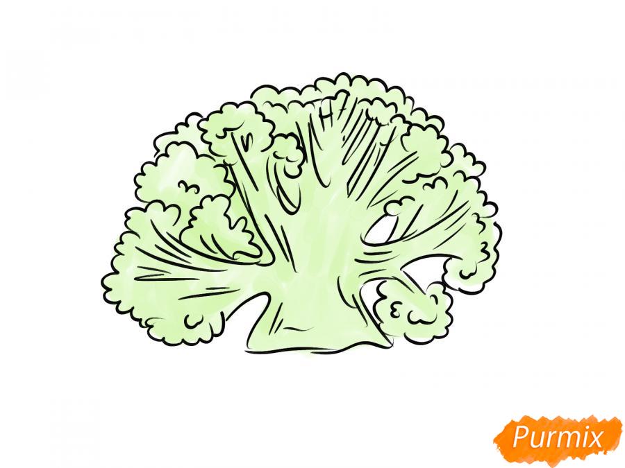 Рисуем цветную капусту в разрезе - шаг 6