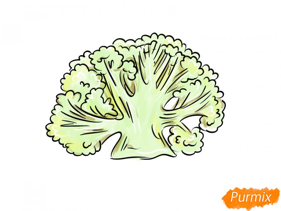 Рисуем цветную капусту в разрезе - шаг 8