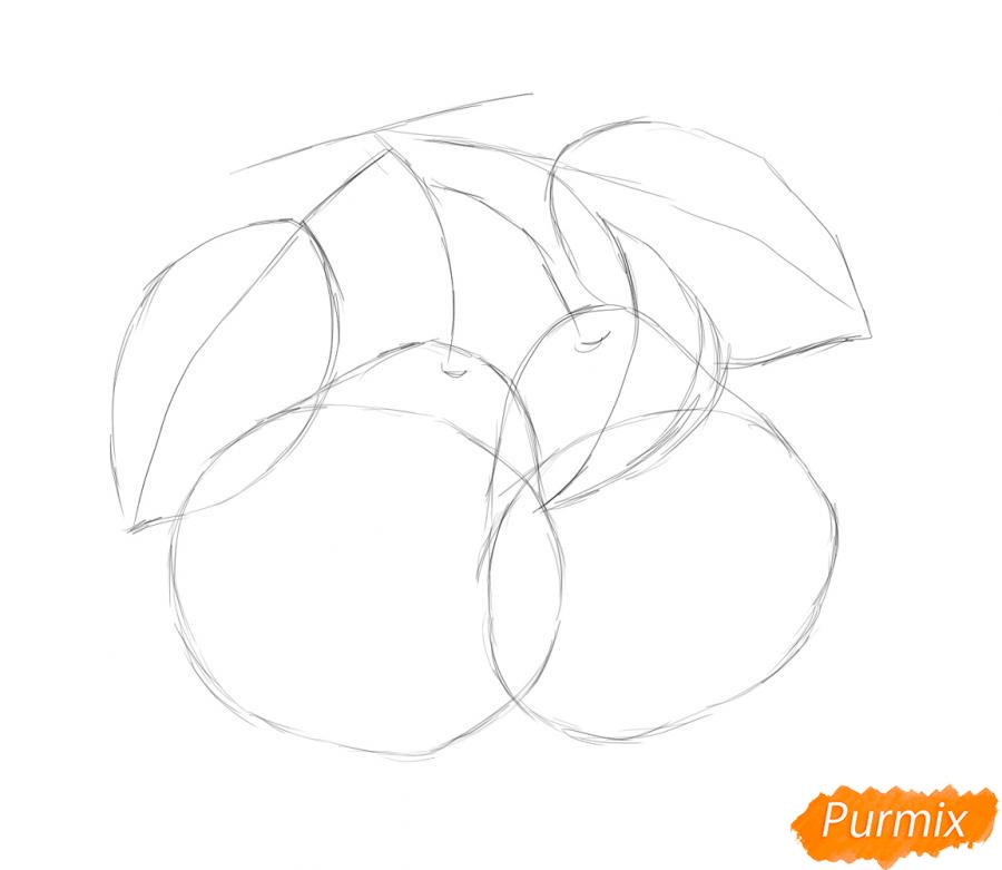 Рисуем две груши на ветке - шаг 2