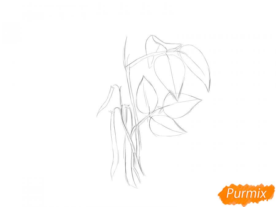 Рисуем фасоль на кусте - шаг 3