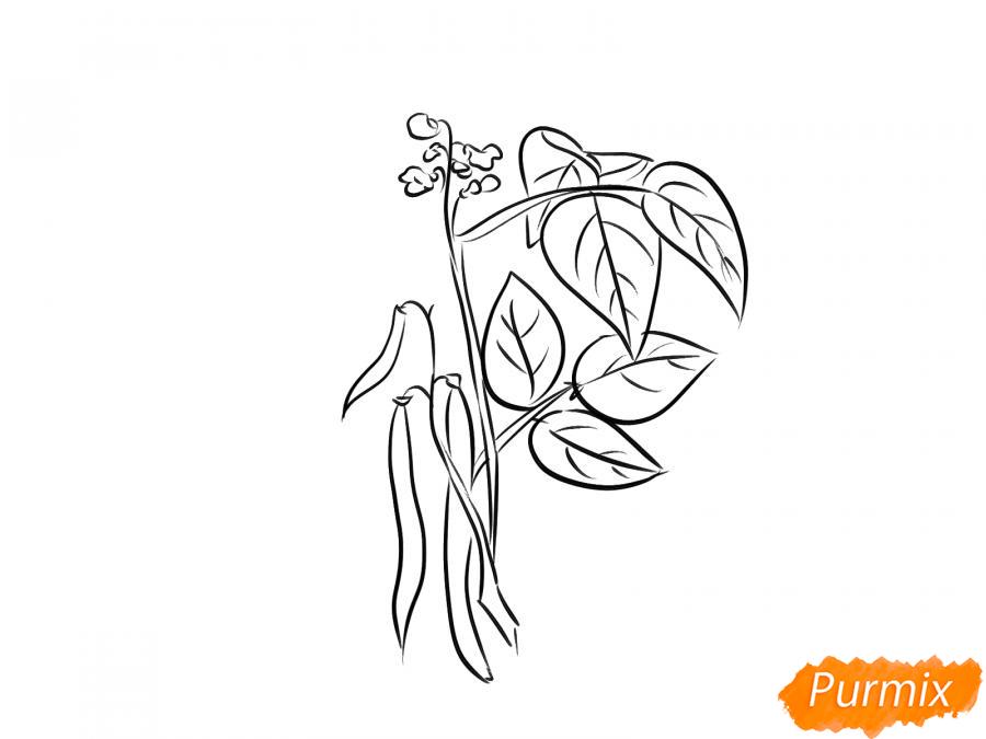 Рисуем фасоль на кусте - шаг 5