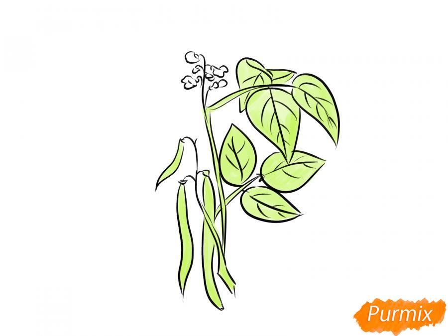 Рисуем фасоль на кусте - шаг 6