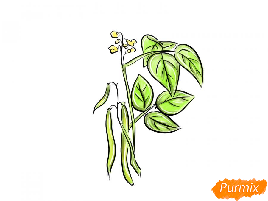 Рисуем фасоль на кусте - шаг 9