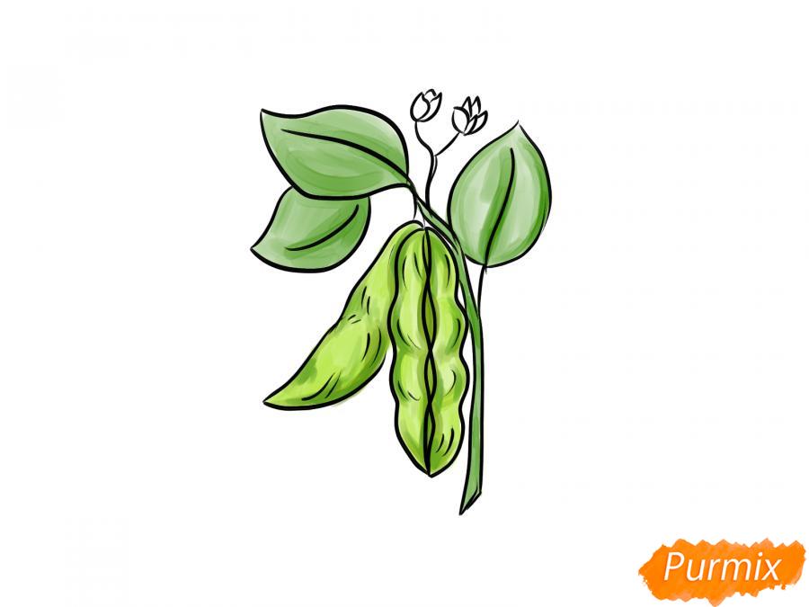 Рисуем фасоль на ветке - шаг 7