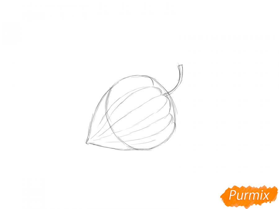 Рисуем физалис карандашами - шаг 4