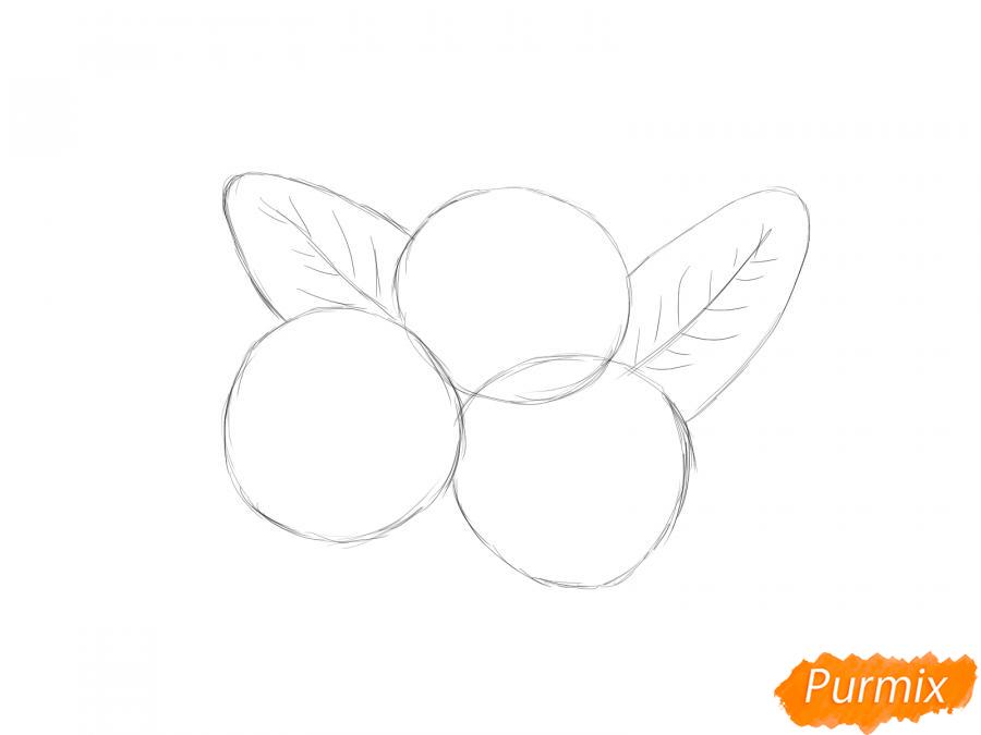 Рисуем голубику карандашами - шаг 2