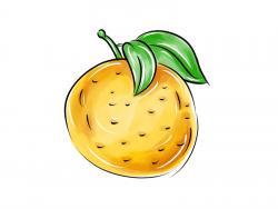 Фото грейпфрут