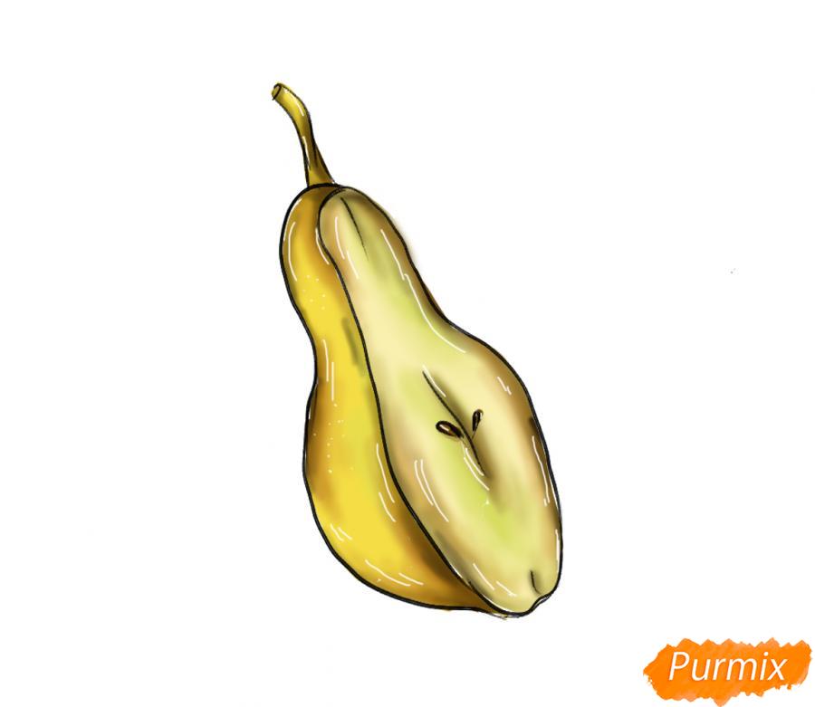 Рисуем грушу в разрезе - шаг 8