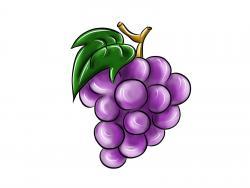 Фото виноград карандашом