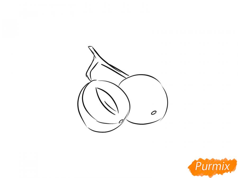 Рисуем калину в разрезе - шаг 4