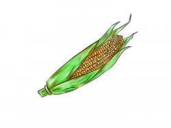 Фото кукурузу