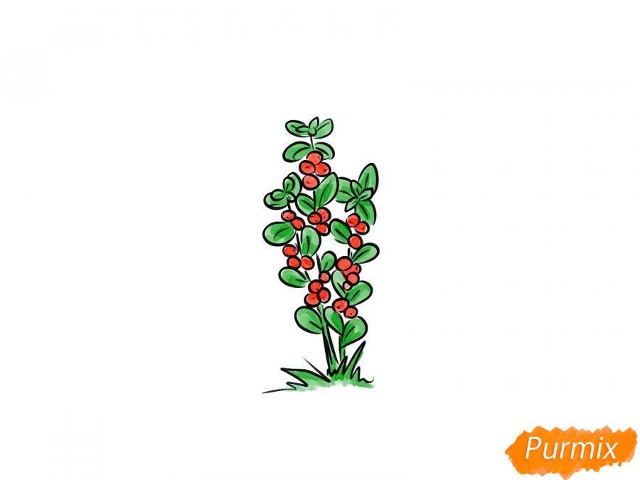 Рисуем куст клюквы - шаг 7