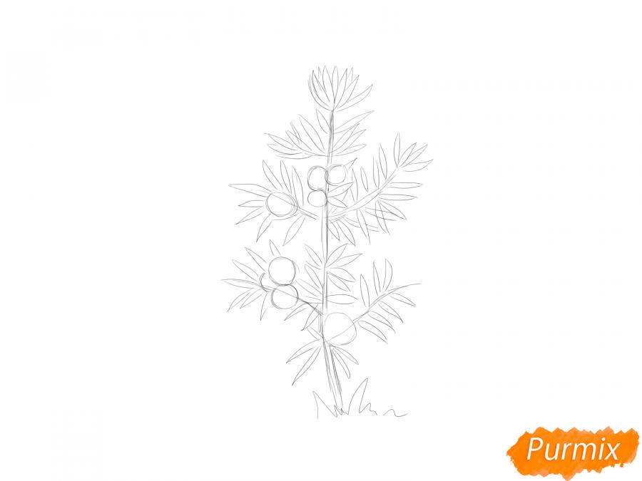Рисуем куст можжевельника - шаг 3