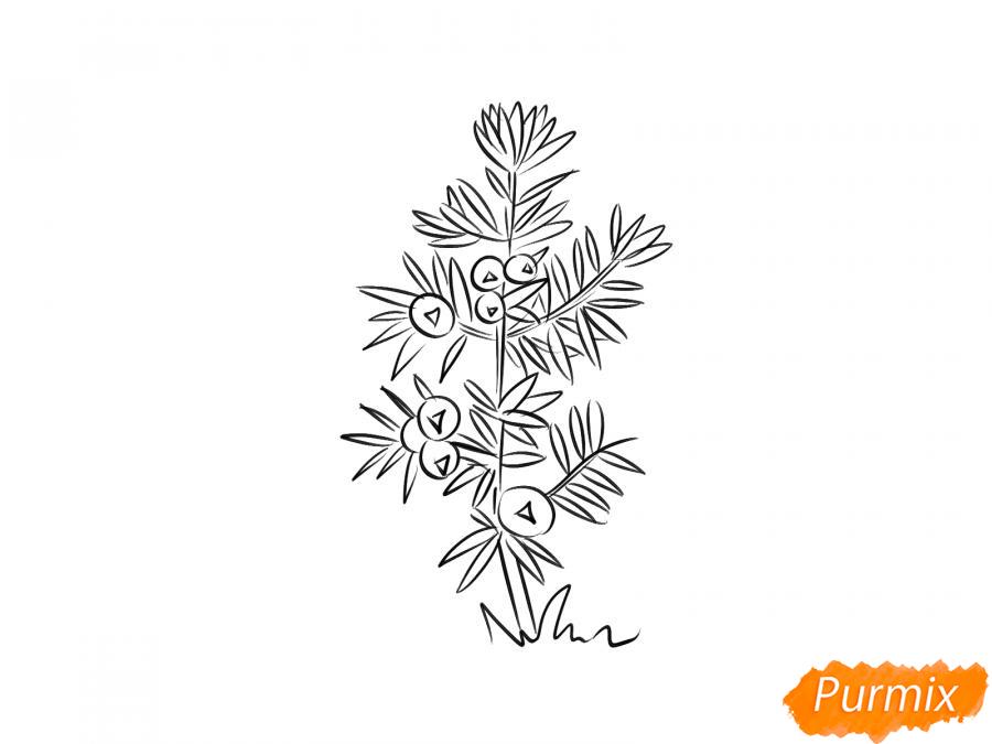 Рисуем куст можжевельника - шаг 5