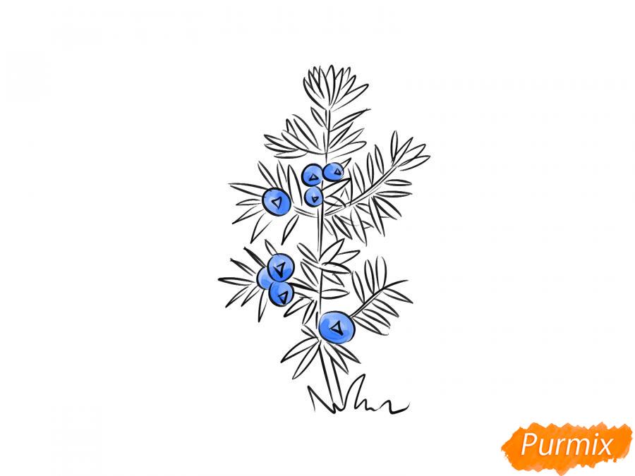 Рисуем куст можжевельника - шаг 6