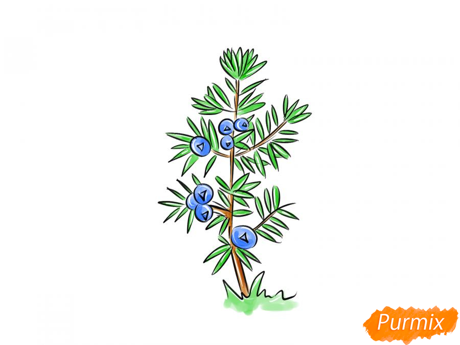 Рисуем куст можжевельника - шаг 9