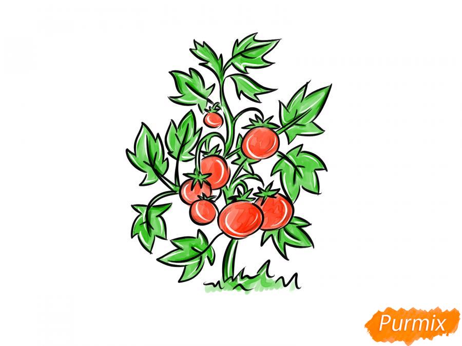Рисуем куст помидоров - шаг 10