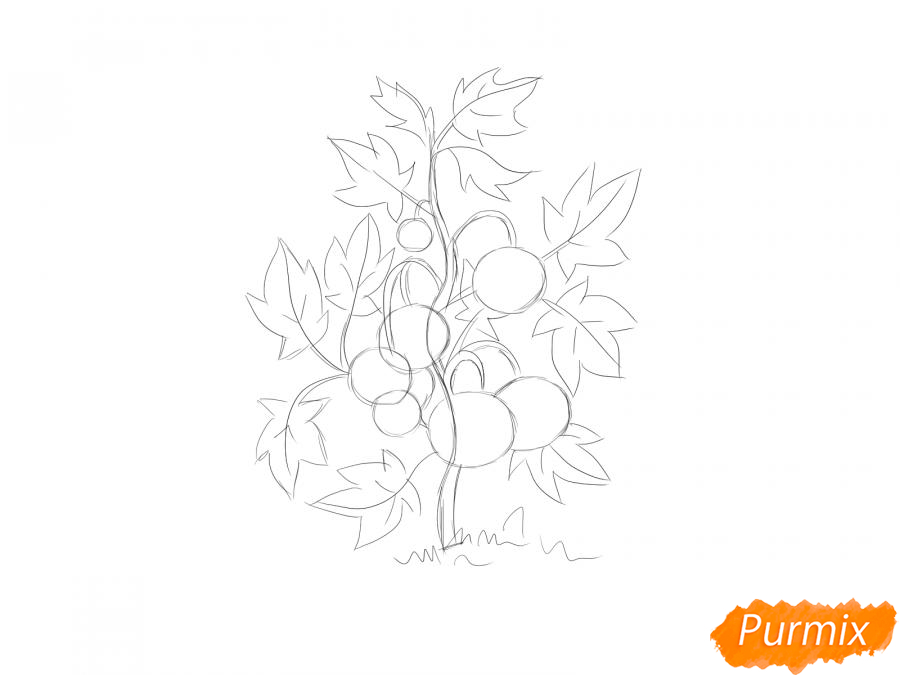 Рисуем куст помидоров - шаг 5
