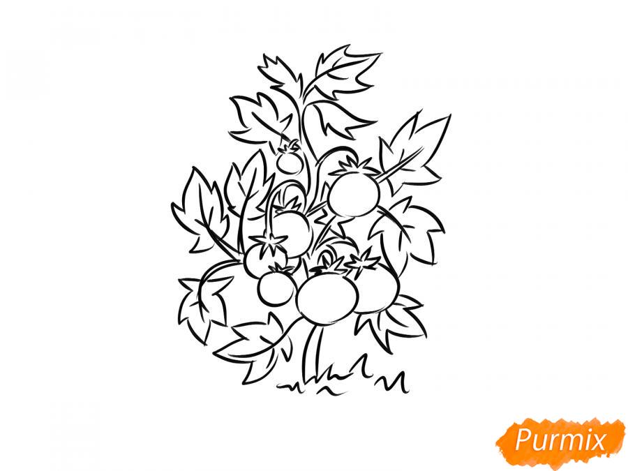Рисуем куст помидоров - шаг 7