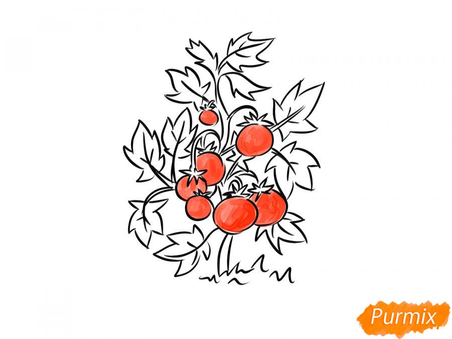 Рисуем куст помидоров - шаг 8