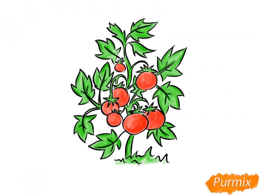 Рисуем куст помидоров - шаг 9
