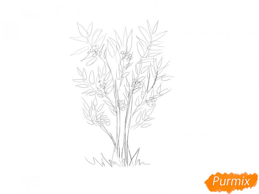 Рисуем куст рябины - шаг 3
