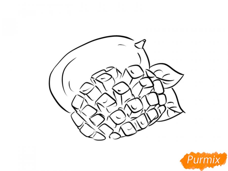 Рисуем манго в разрезе - шаг 6
