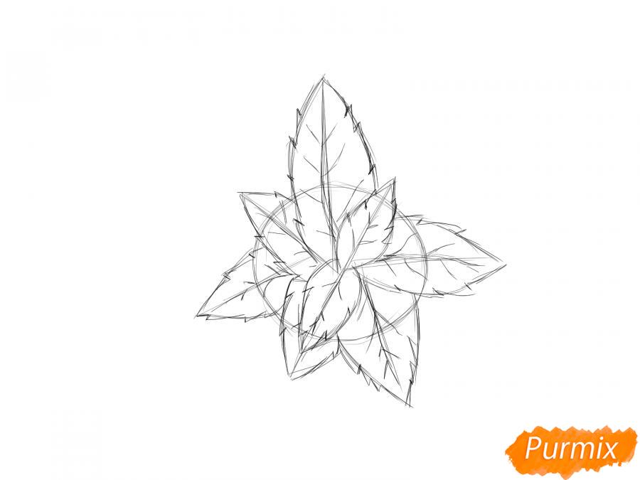 Рисуем мяту - шаг 4