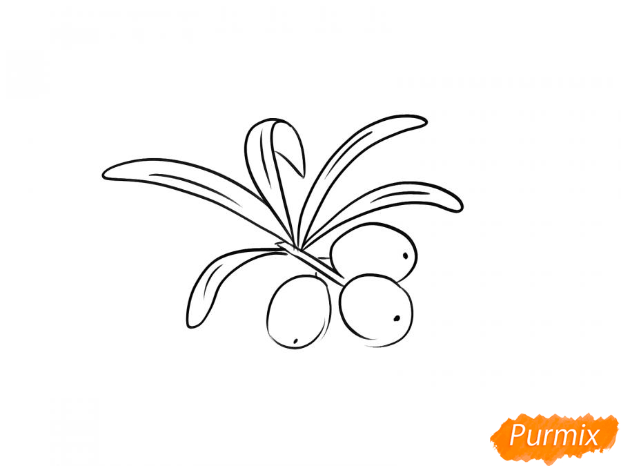 Рисуем облепиху карандашами - шаг 5