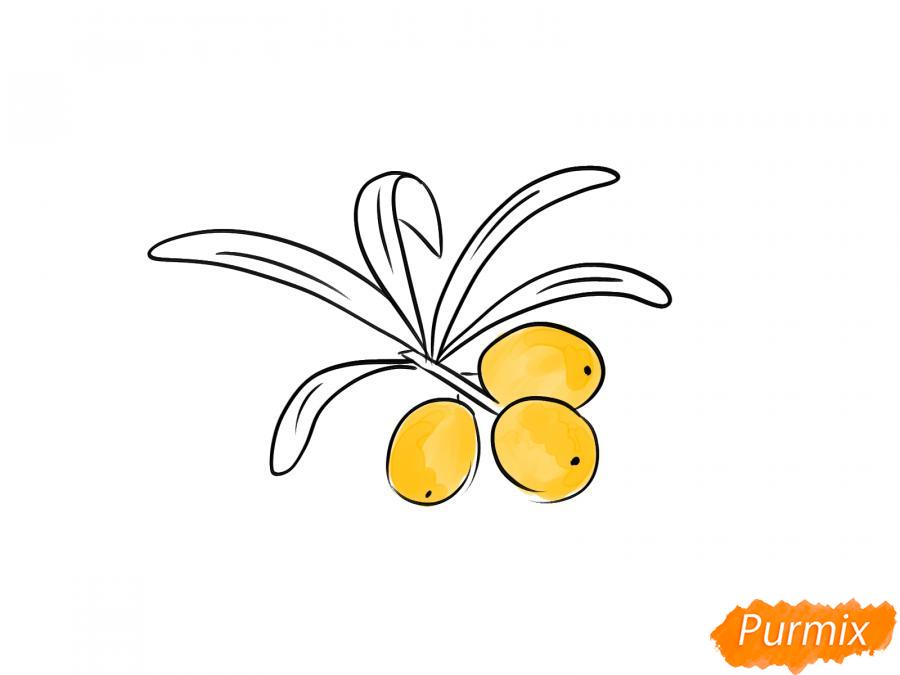 Рисуем облепиху карандашами - шаг 6