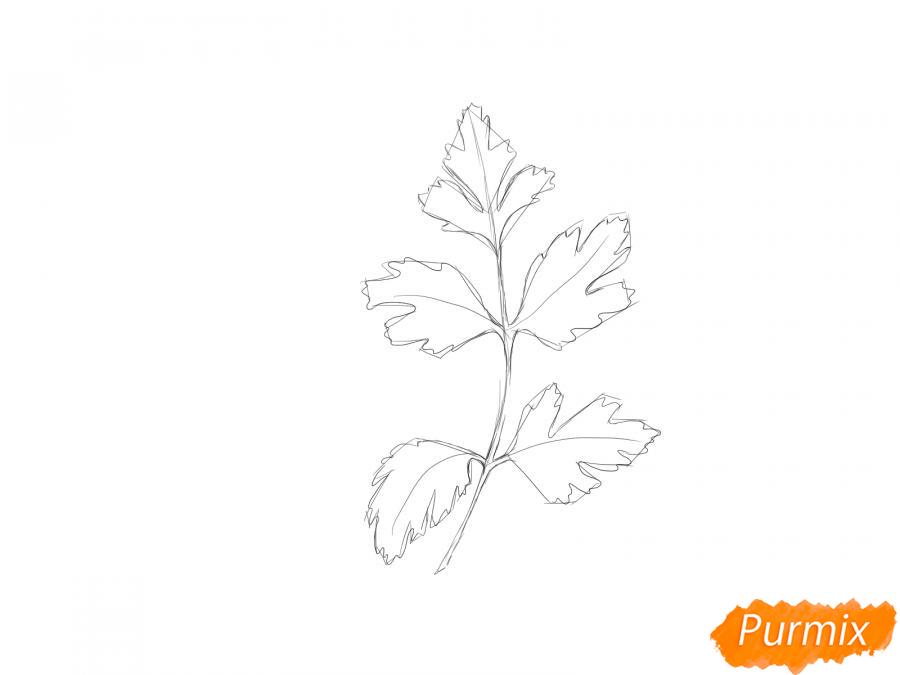 Рисуем петрушку зелень - шаг 3