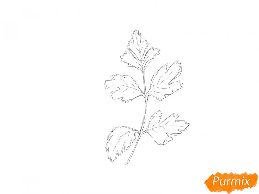 Рисуем петрушку зелень - шаг 4