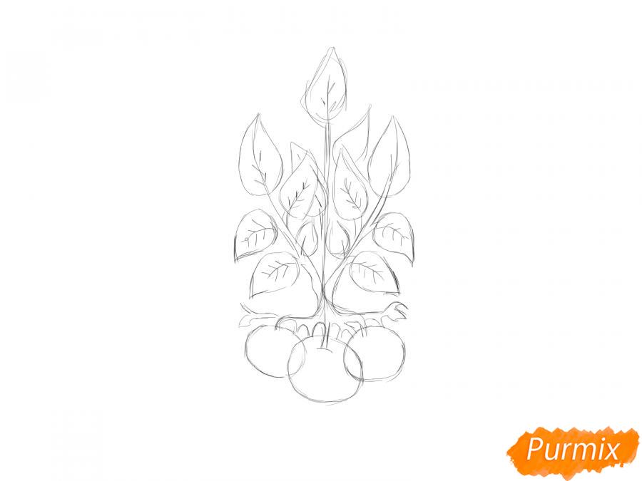 Рисуем пучок картофеля с ботвой - шаг 4