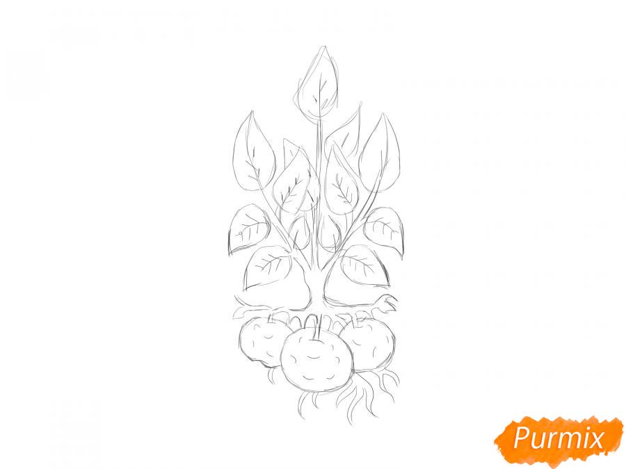 Рисуем пучок картофеля с ботвой - шаг 5