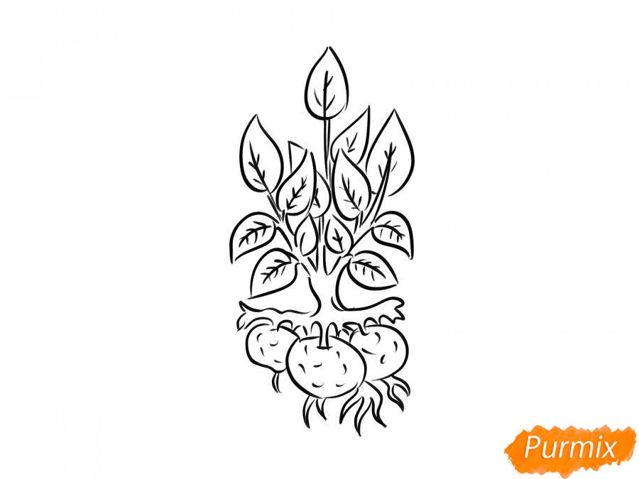 Рисуем пучок картофеля с ботвой - шаг 6