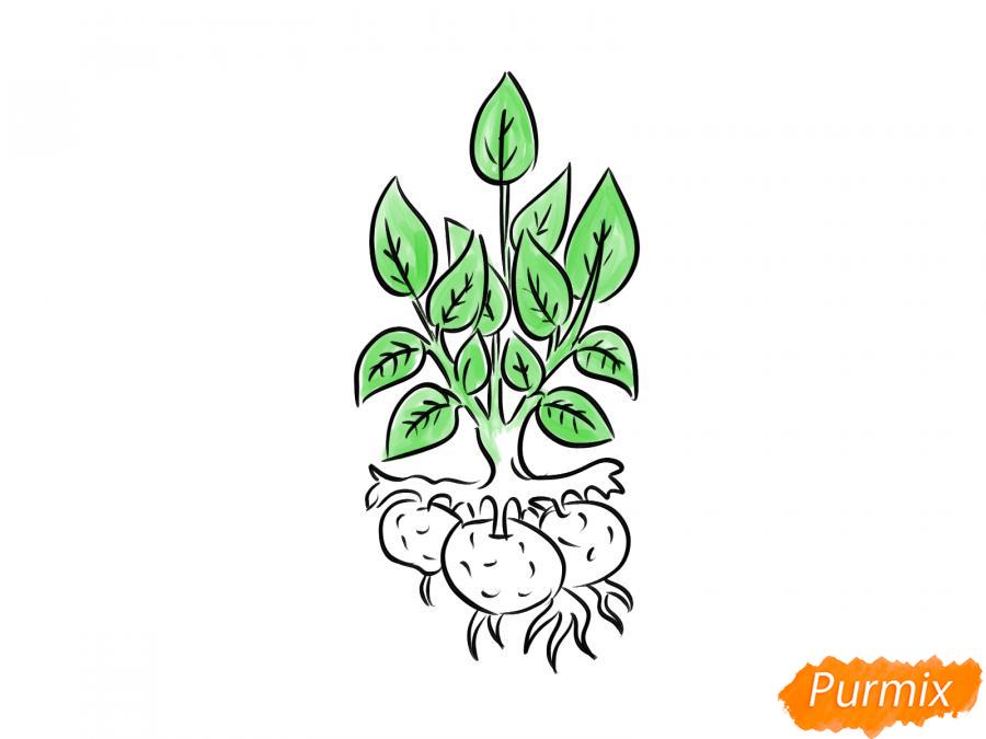Рисуем пучок картофеля с ботвой - шаг 7