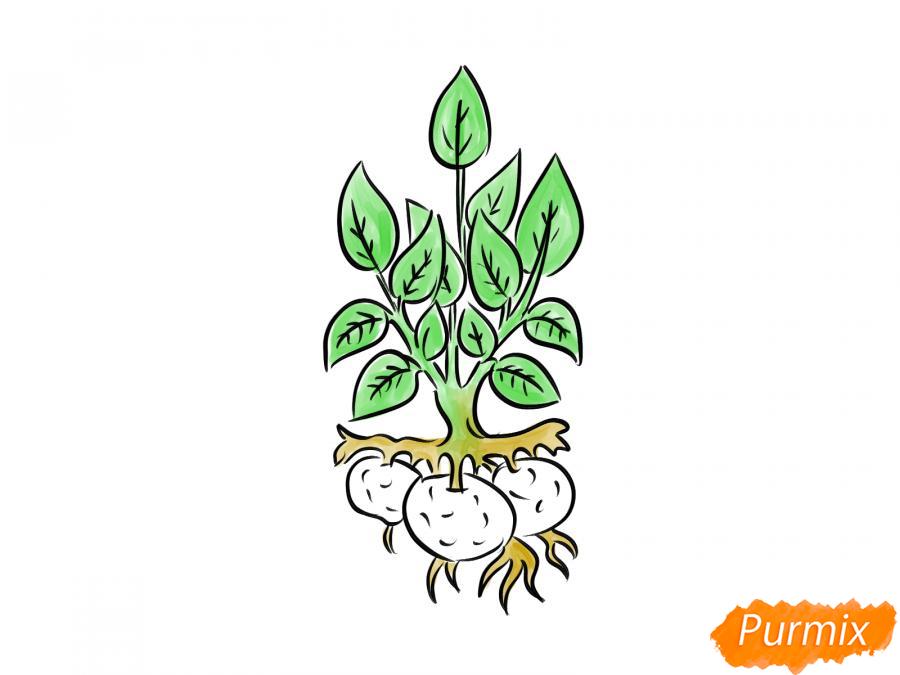 Рисуем пучок картофеля с ботвой - шаг 8