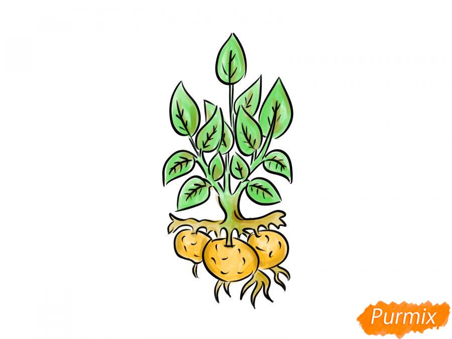 Рисуем пучок картофеля с ботвой - шаг 9