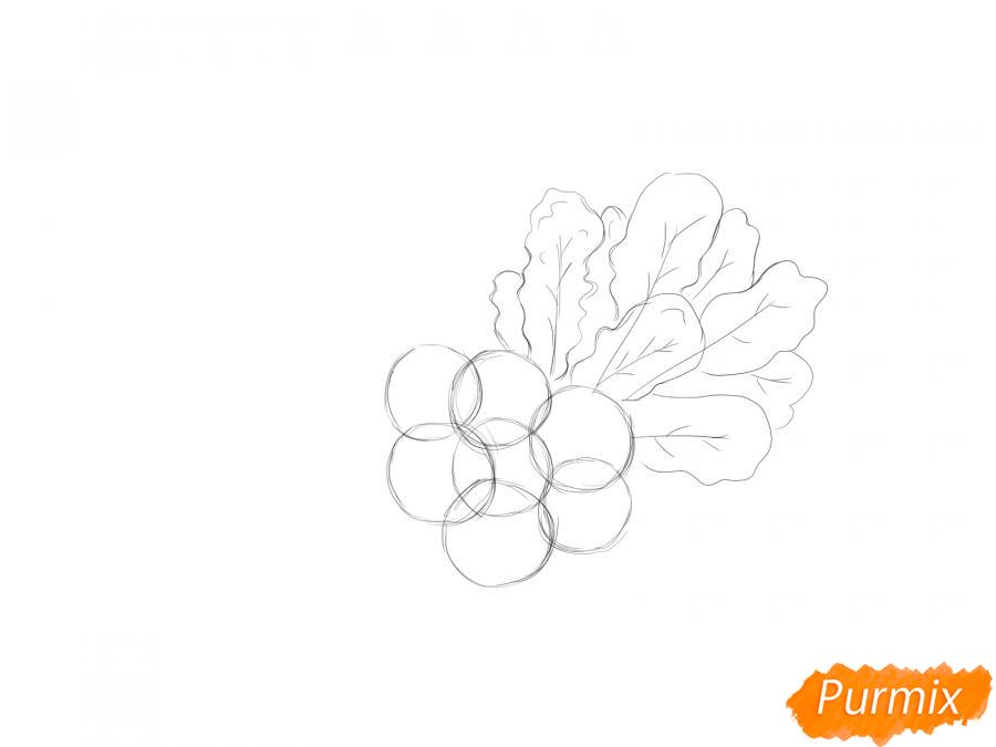 Рисуем пучок редиски - шаг 3