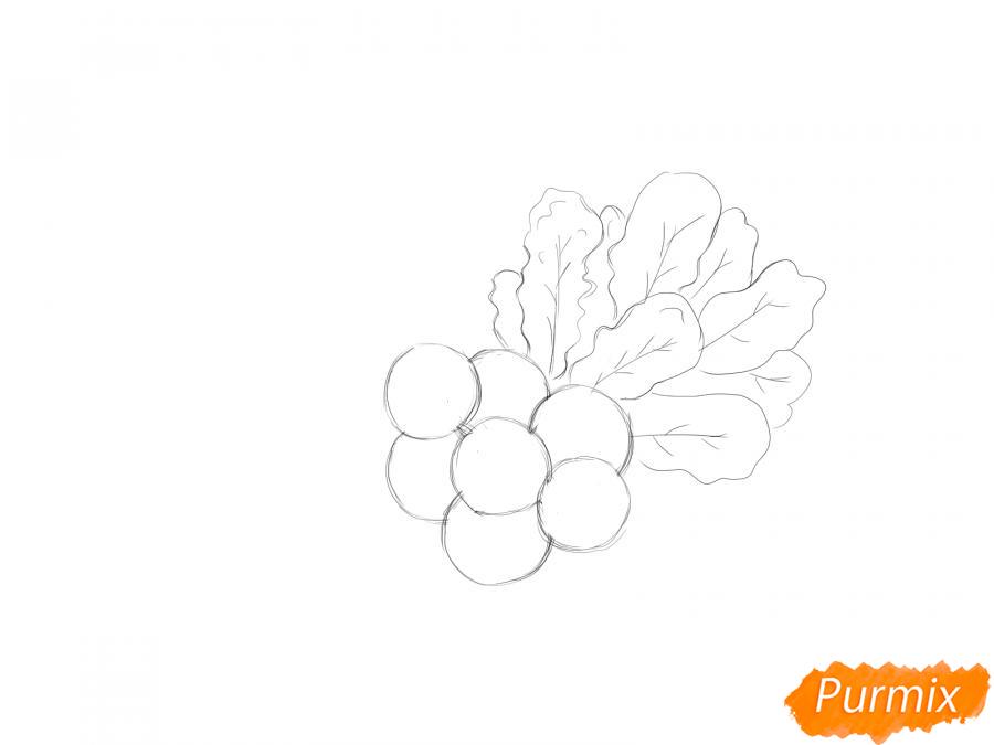 Рисуем пучок редиски - шаг 4