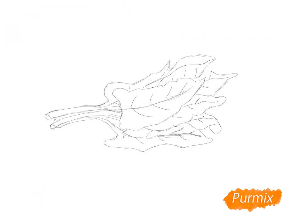 Рисуем пучок щавеля - шаг 4